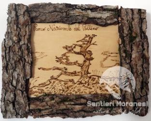quadretto con pino loricato pirografato e corteccia di ontano nero